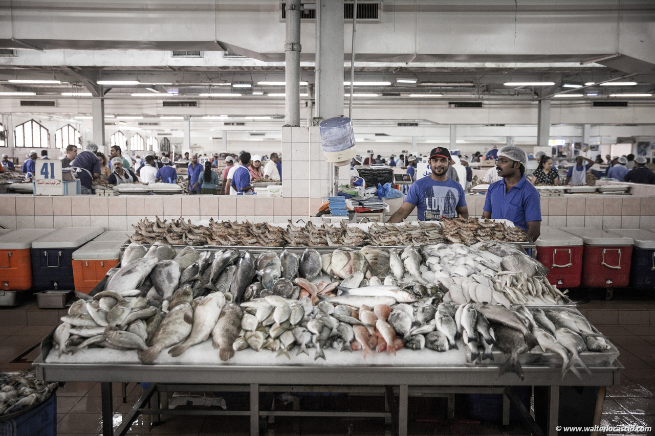 Abu_Dhabi_fish_market (25)