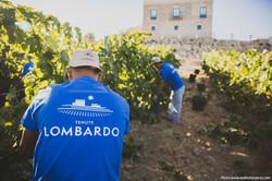tenute_Lombardo_vini18
