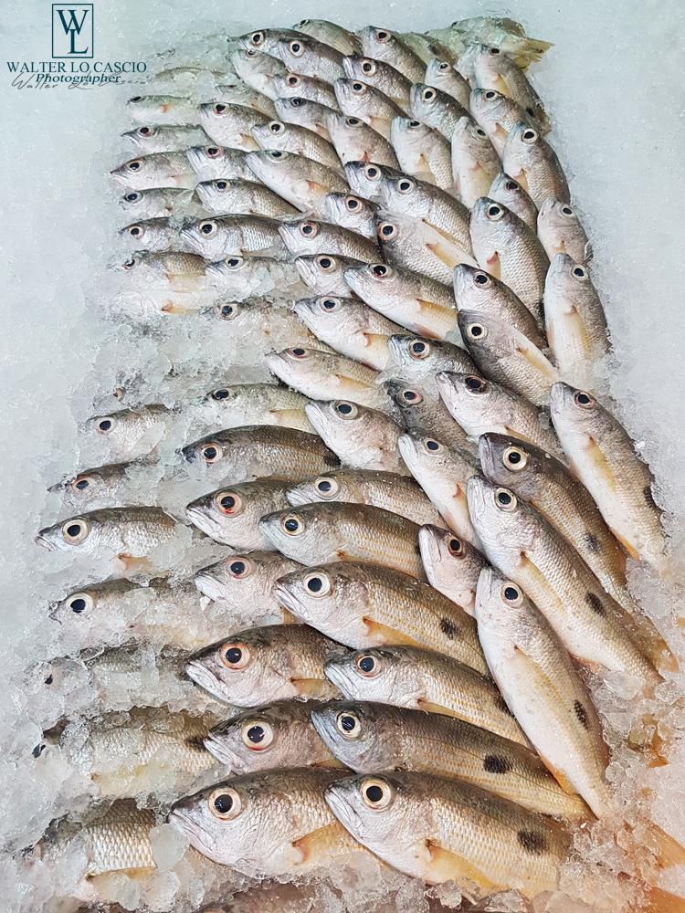 Abu_Dhabi_fish_market (53)