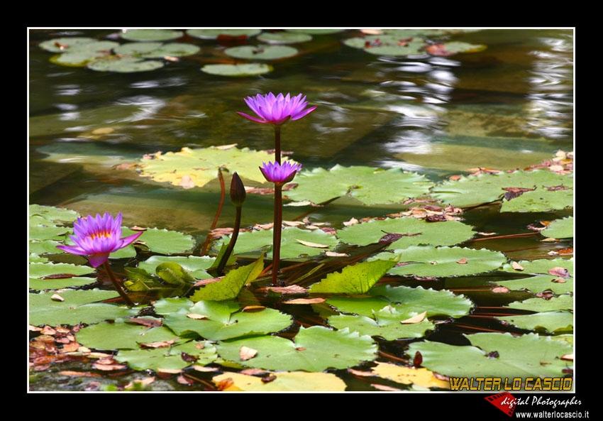 suzhou-e-tongli_4089279618_o.jpg