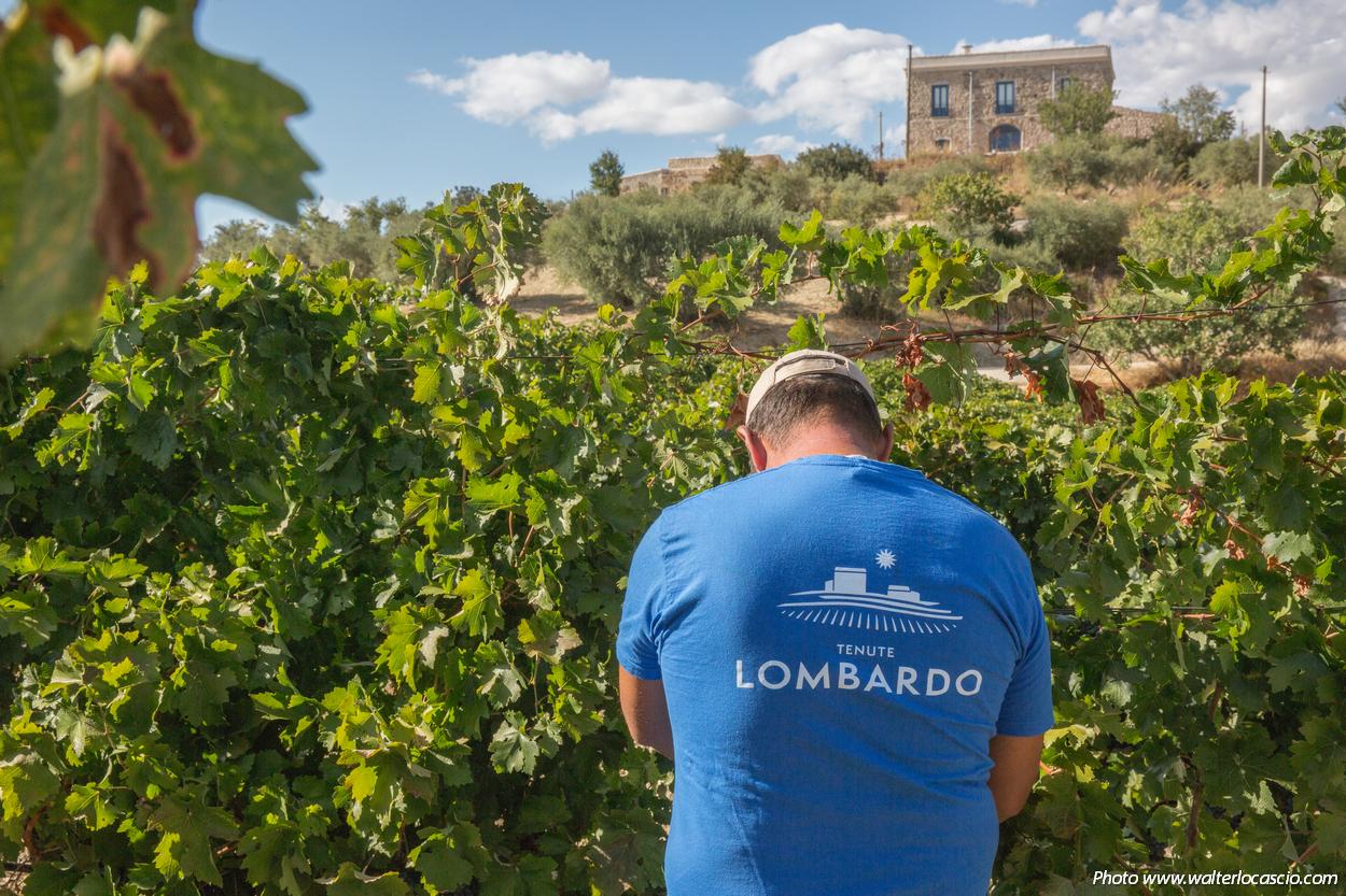 tenute_Lombardo_vini85