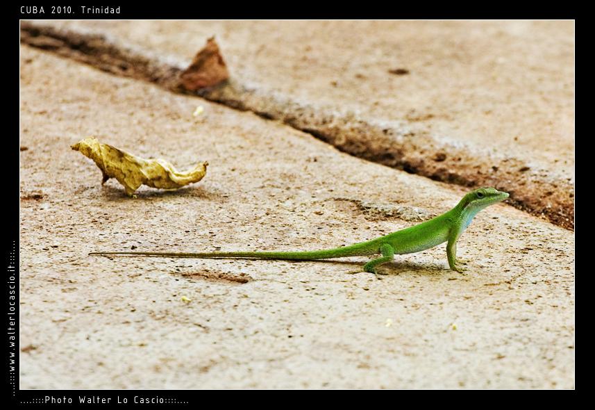 cuba-2010-trinidad_5074437647_o.jpg