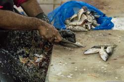 Abu_Dhabi_fish_market (10)