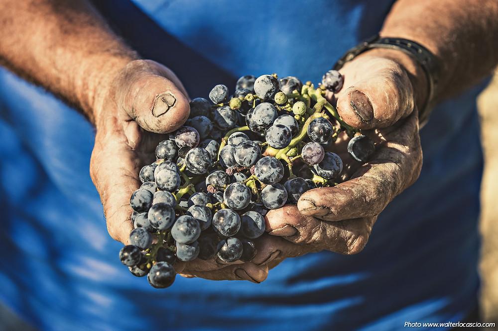 Tenute Lombardo Vini
