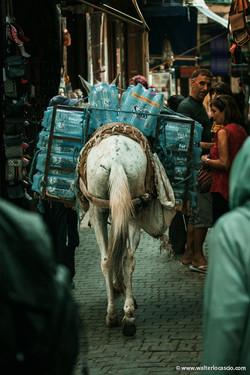 Marocco_Fes_IMG_0279