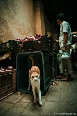 Marocco_Fes_IMG_4519