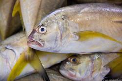 Abu_Dhabi_fish_market (46)