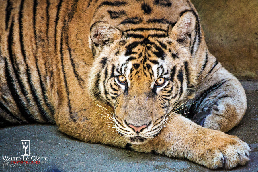thailandia-2014_15164268389_o.jpg
