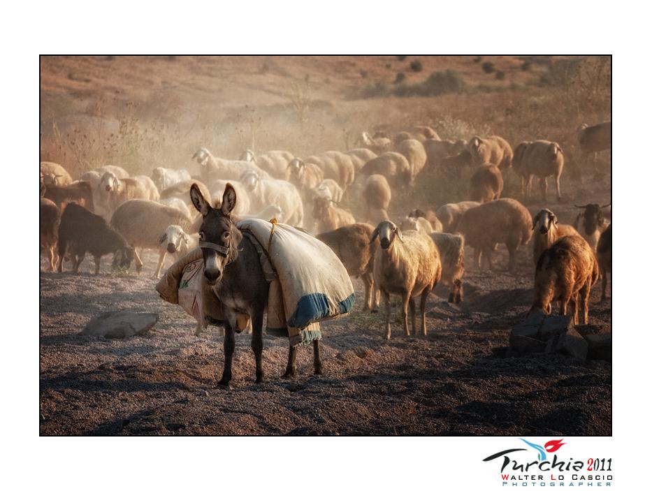 turchia-2011-cappadocia_6175529305_o.jpg