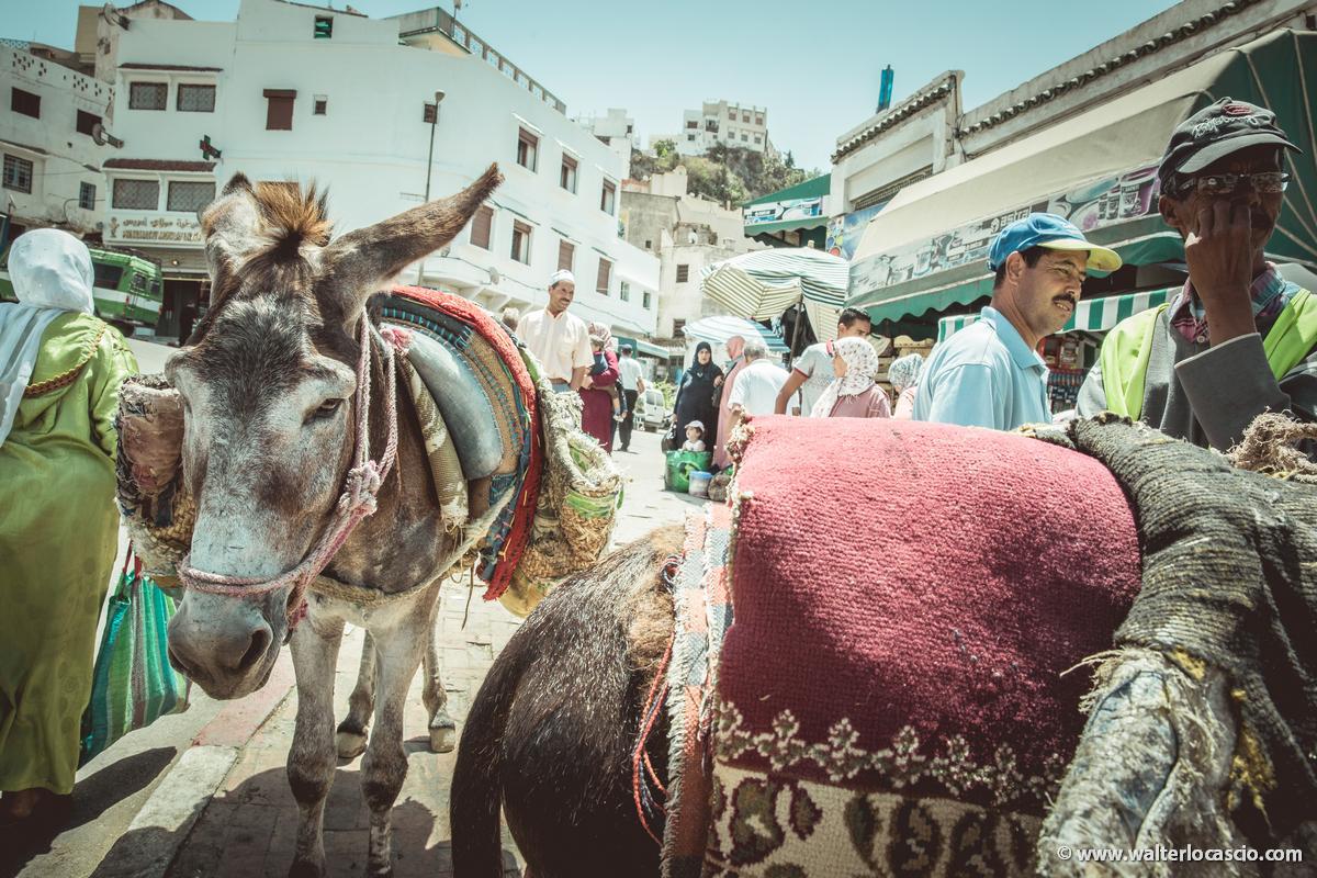 Marocco_MOULAY_DRISS_ZERHOUN _IMG_3482