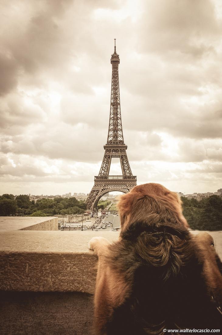 Parigi (359)