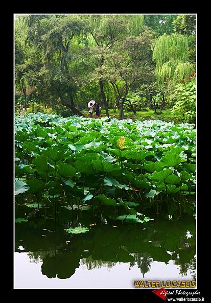 suzhou-e-tongli_4088531383_o.jpg