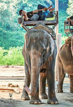 thailandia-2014_15230954758_o.jpg