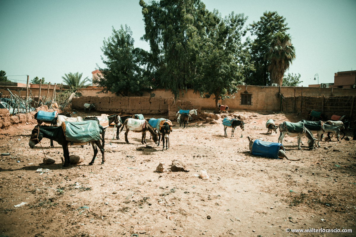 Marocco_Aghmat_Mercato_IMG_5633