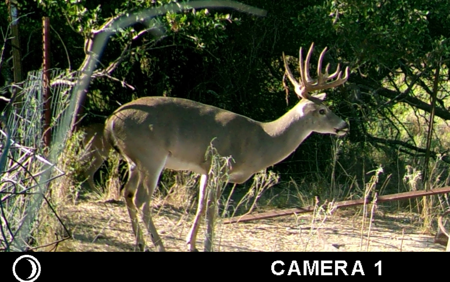 DeerOct2019-3_edited.jpg