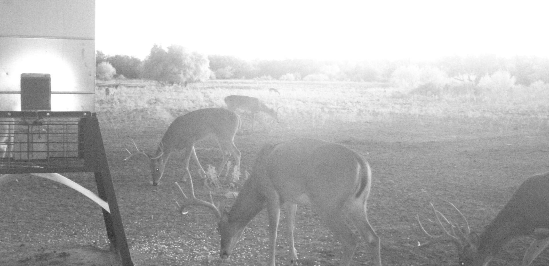 DeerOct2019-1.JPG