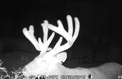 buck4 (1 of 1)