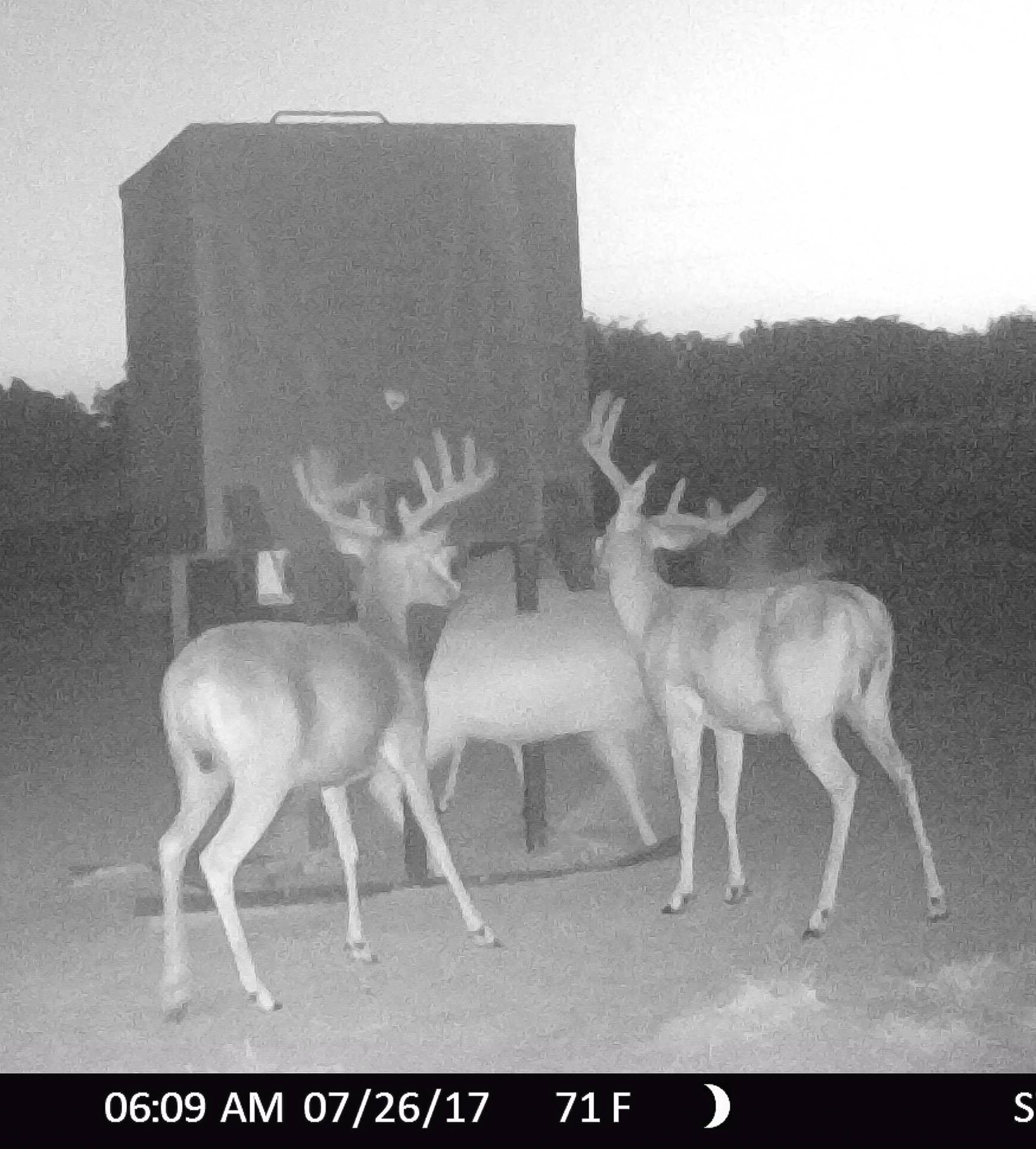 buck3 (1 of 1)