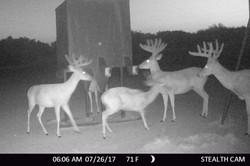 buck2 (1 of 1)