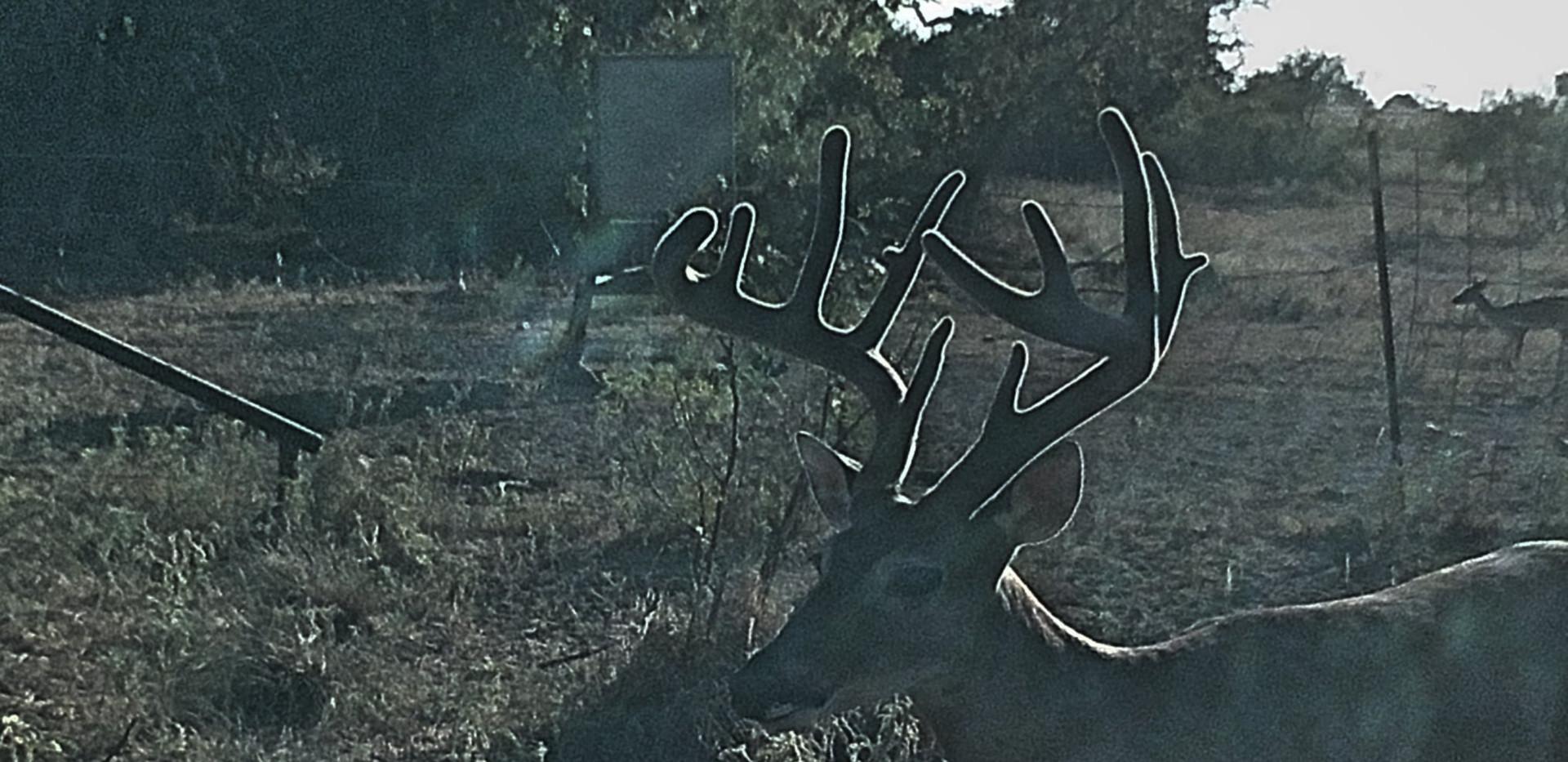 BuckAug14th2020-10.jpg