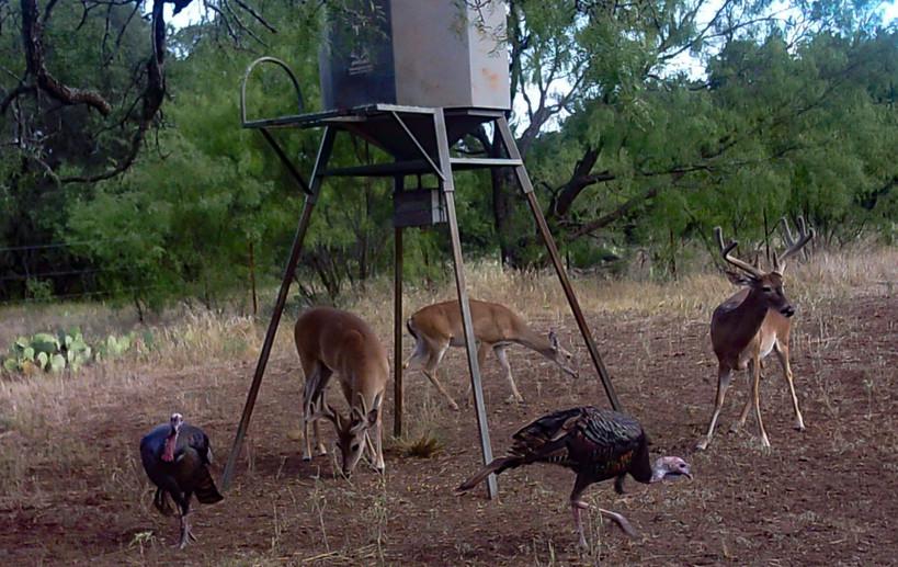 Deerturkey (1 of 1).jpg