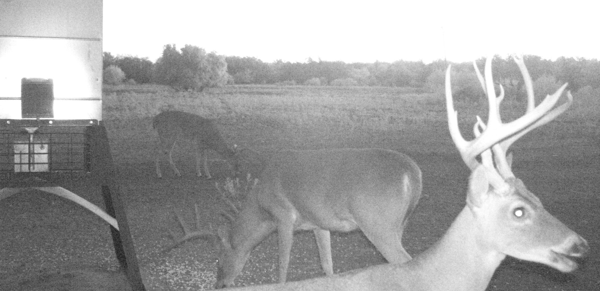 DeerOct2019-2.JPG