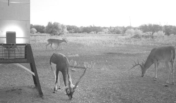 DeerOct2019-6.JPG