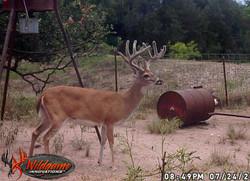 buck1 (1 of 1)
