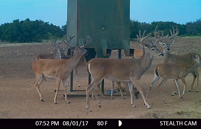 buck5 (1 of 1)
