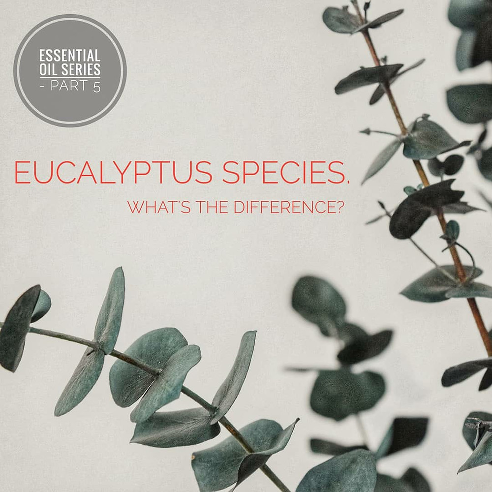 eucalyptus species, plant, essential oil