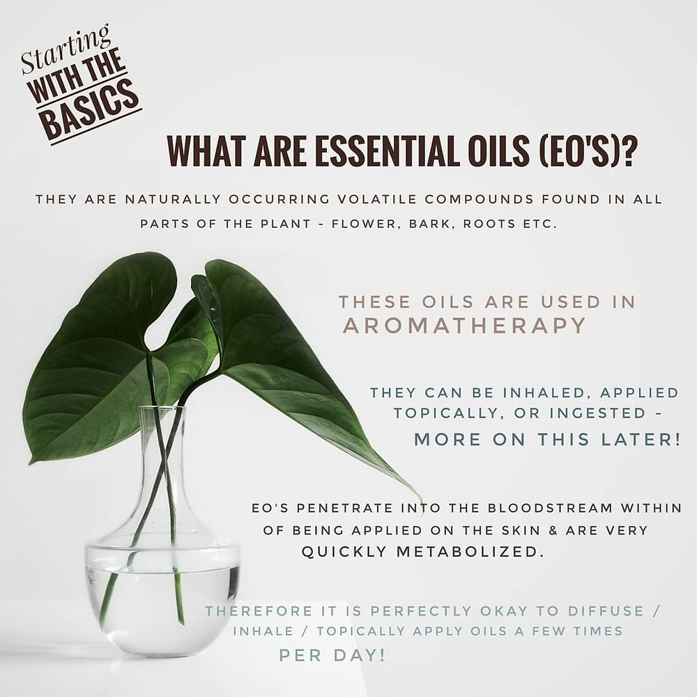 aromatherapy, essential oil basics, plant, flower