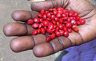 jardin botanique de Conakry avec WOA