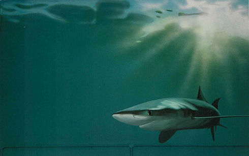 Handpainted mural by Kate Crawfurd at Shark trust office, Plymouth