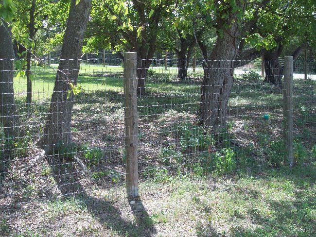 5ft Goat Fence