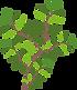 Arbustos.png