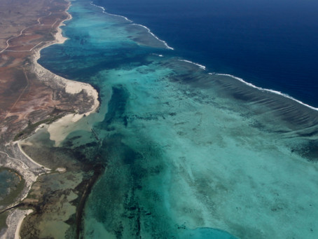 Ningaloo: Australia's Secret Reef