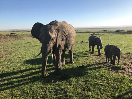 Masai Mara: Watching the Wild Life of Wildlife