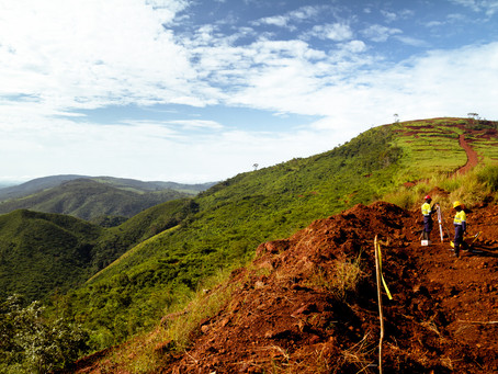 """From Freetown to """"Treetown"""": Can urban reforestation build environmental resilience in Sierra Leone?"""