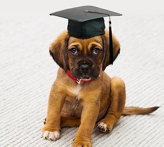 puppy school.jpg