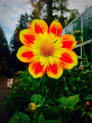 Bloom, baby, bloom
