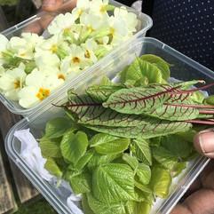 hotmealsnow primroses, lime leaves and