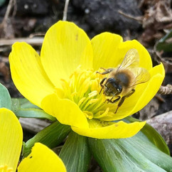 First #bee of the year #spring is defini