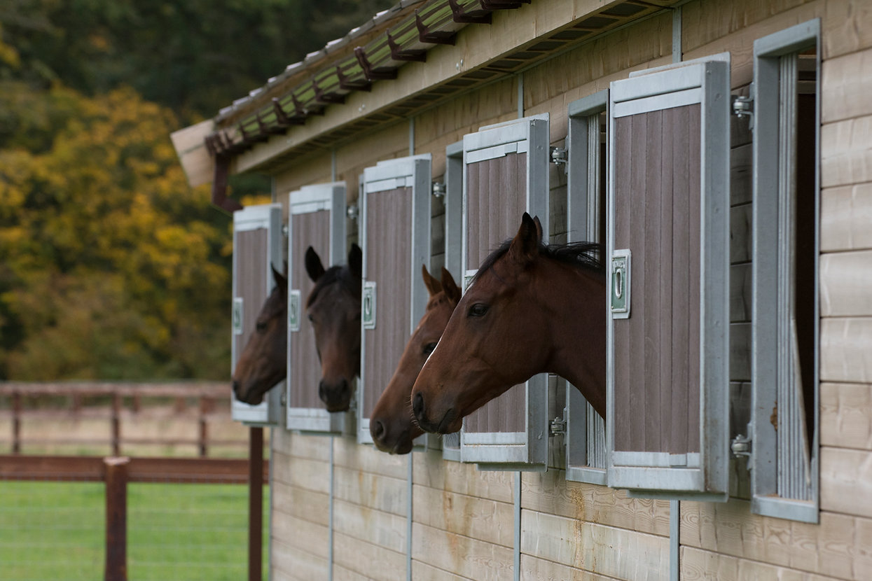 Racehorse pre training breaking and rehabilitation stable yard in Newmarket Morgan Evans Equestrian