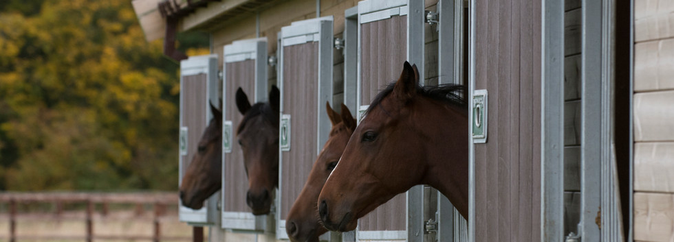 DSC_0234 horse heads out of stables.jpg