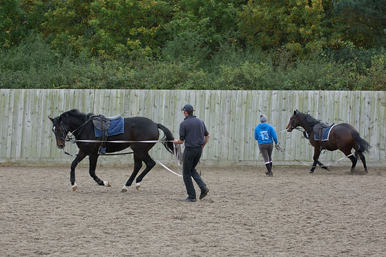 Racehorse backing and breaking in Newmarket England Morgan Evans Equestrian