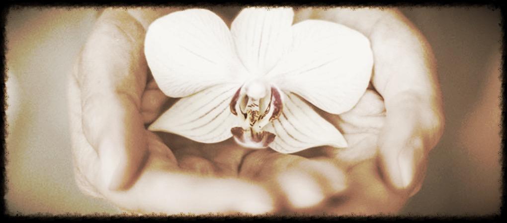 orchid_edited.jpg