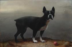 Captain's Dog