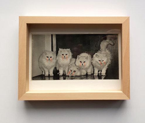 Lasercat family
