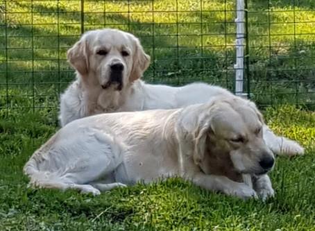 Kennelträff och hundvakt
