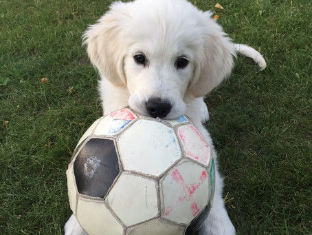 Blivande fotbollsproffs??